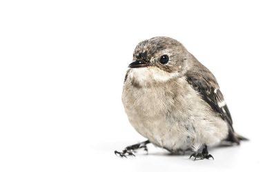Vogel gefunden?